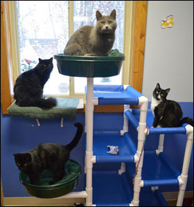 Washburn County Area Humane Society