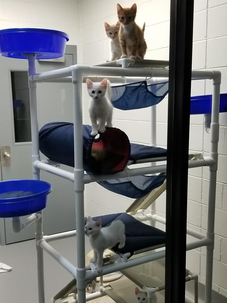 Several cats in a shelter enjoying a Feline Snoozers Activity Tower