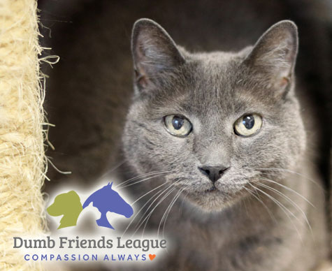 Feline Snoozers Featured Shelter Dumb Friends League
